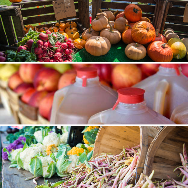Autumn at the New Rochelle Farmers Market